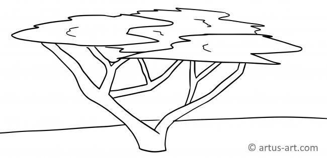 Acacia Coloring Page
