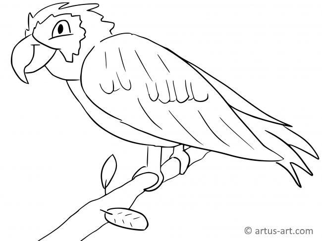 Papagei Ausmalbild Gratis Ausdrucken Ausmalen Artus Art