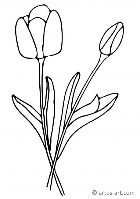 Tulpen Ausmalbild Gratis Ausdrucken Ausmalen Artus Art
