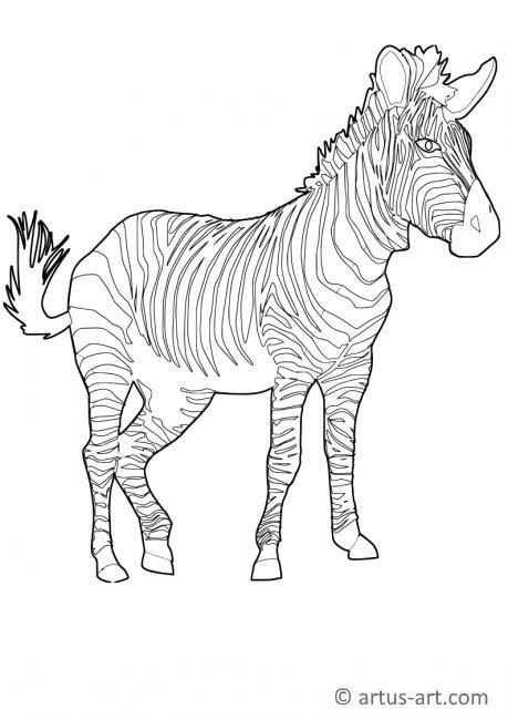 Zebra Ausmalbild Gratis Zebra Malvorlage Zum Ausdrucken Ausmalen