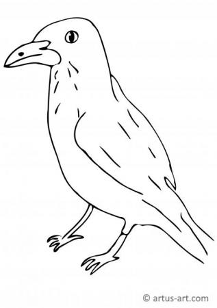 Raven Coloring Page