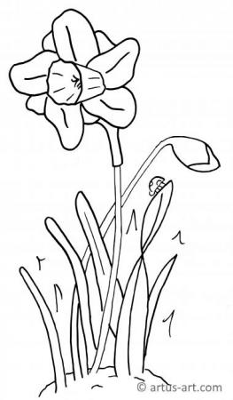 Narcissus Coloring Page
