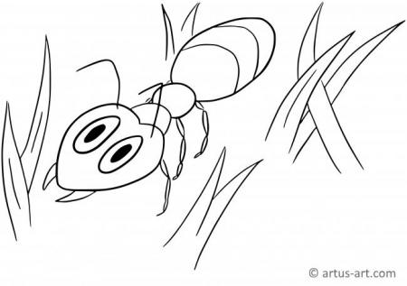 Ant Coloring Page