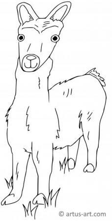 Lama Coloring Page