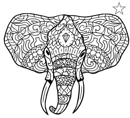 Premium Elefant